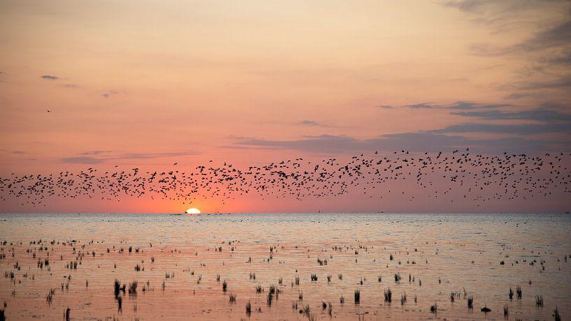 Vögel fliegen bei Sonnenuntergang über die friesischen Wattgebiete. von Barbara Brolsma