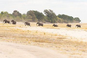 Elefantenherde von GoWildGoNaturepictures