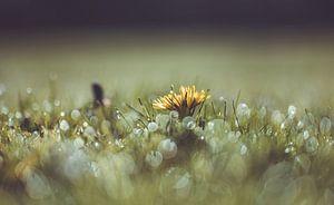 bloemen part 125 van Tania Perneel