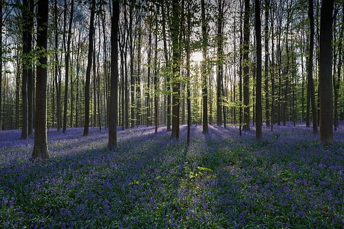 Zonnestralen verlichten het bos