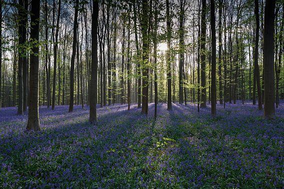 Zonnestralen verlichten het bos van Menno Schaefer