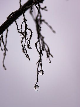 zwarte druppels van Tania Perneel