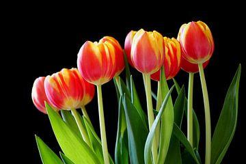 Bos roodgele tulpen