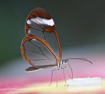 Glasvleugel Vlinder von Ingrid Ronde