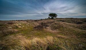 De eenzame boom van Martien Hoogebeen Fotografie