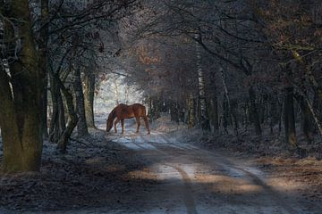 Sprookjes paard op de Veluwe von Cilia Brandts
