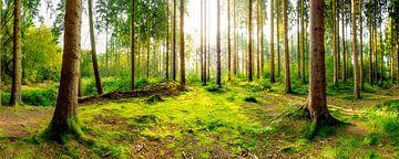 Wald Panorama bei Sonnenaufgang von Günter Albers