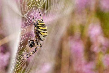 Wespspin in bloeiende heideveld van Stefan Wiebing Photography