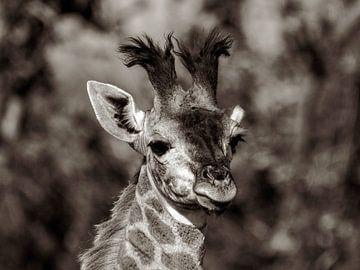 Giraffenporträt von Britta Kärcher