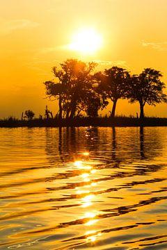 zonsondergang Chobe rivier van Edith Büscher