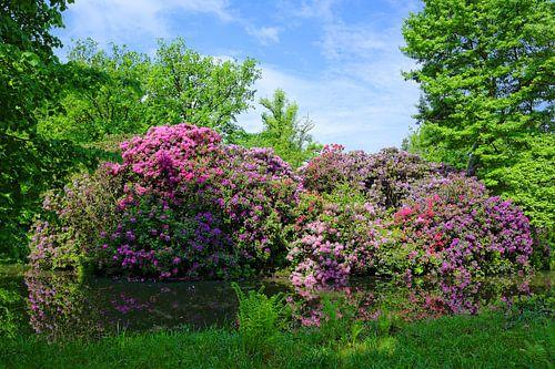 Lovely Rhododendren van Gisela Scheffbuch