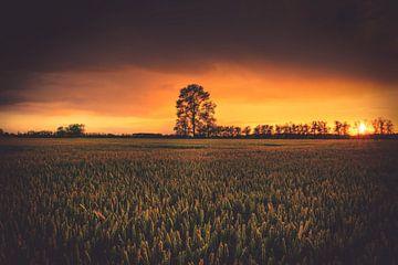 Arbre à l'horizon sur Skyze Photography by André Stein