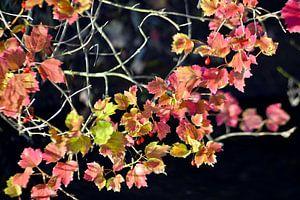 Herfst Poëtisch Geluid van Silva Wischeropp