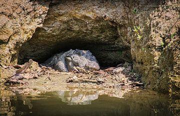 Krokodil op de loer aan de oever, Nepal van Rietje Bulthuis