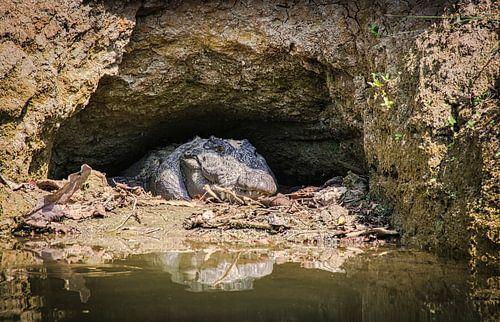 Krokodil op de loer aan de oever, Nepal