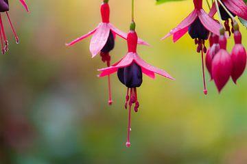 roze en paarse hangertjes van