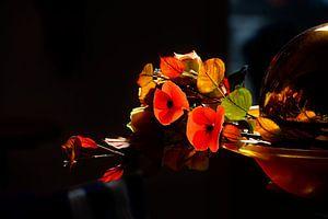 Zonlicht op herfst-boeket in september van ellenilli .