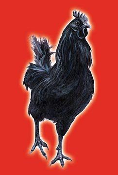 Big Black Cock (grote zwarte haan) von Studio Fantasia