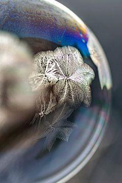 Frozen stars van Stefanie van Dijk