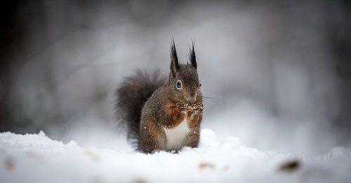 Squirrel eating van