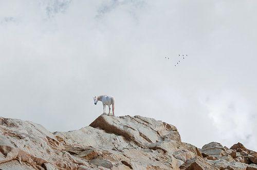 Paard op rotsen van