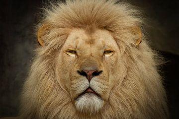 Nahaufnahme eines Löwen von Dennis Schaefer