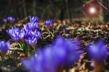 Concept flora : Wilde dieren van Michael Nägele