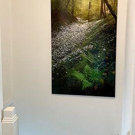 Klantfoto: Velden vol met daslook in de mooie bossen van Zuid Limburg van Jos Pannekoek, op aluminium