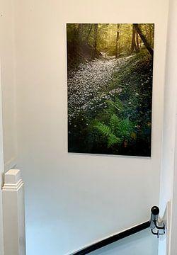 Klantfoto: Velden vol met daslook in de mooie bossen van Zuid Limburg van Jos Pannekoek