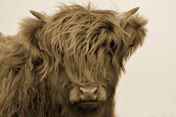 Schotse hooglander kop kalf sepia van Sascha van Dam