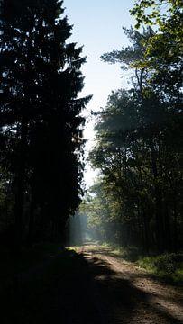 Pflichtfeld von Sander Huizinga