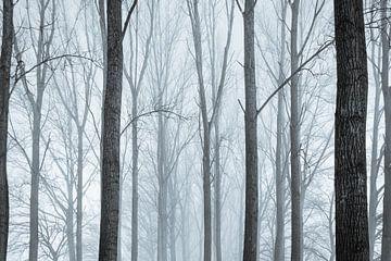 Angstig bos van Kris Christiaens