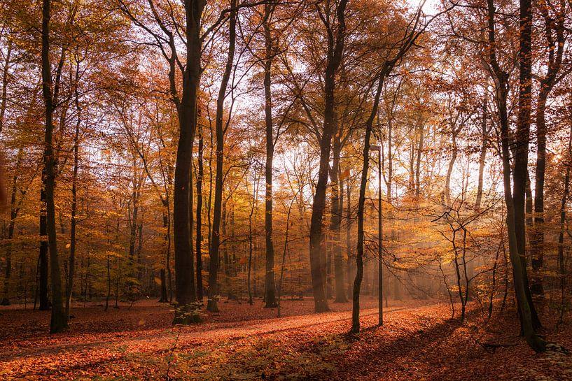 Herbststimmung in der Frühe van Kurt Krause