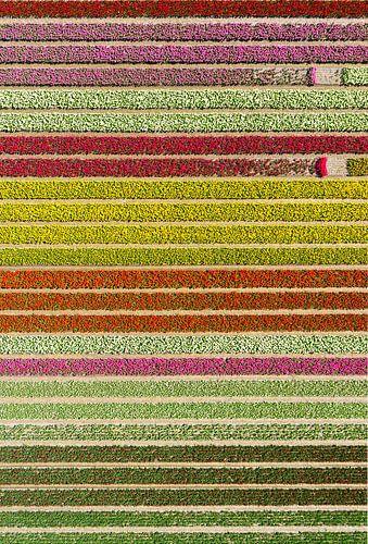 Färgfält med avbrott.  von Anders Andersson