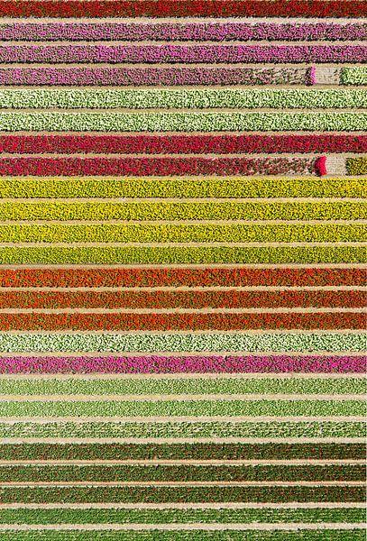 Färgfält med avbrott.  van Anders Andersson