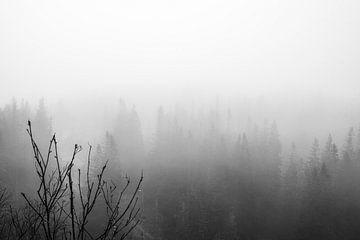 Nebliger Wald in Schwarz-Weiß-Fotodruck von Manja Herrebrugh - Outdoor by Manja