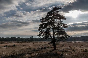 Boom tegen zonsondergang van Inge Heeringa