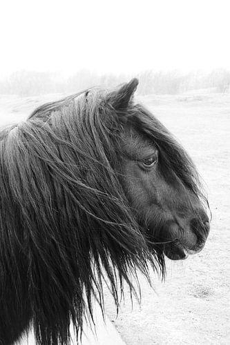 Pony bij Westerschouwen van Michelle Boot