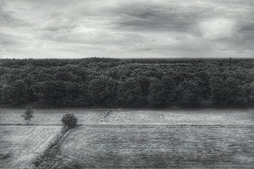 Hoch über den Bäumen von Jacob Raymond de Boer