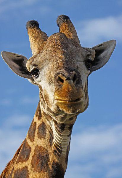 The Giraffe van W. Woyke