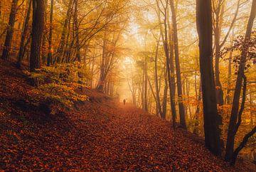 De mistige heuvel van het oranje bos van Joris Pannemans - Loris Photography