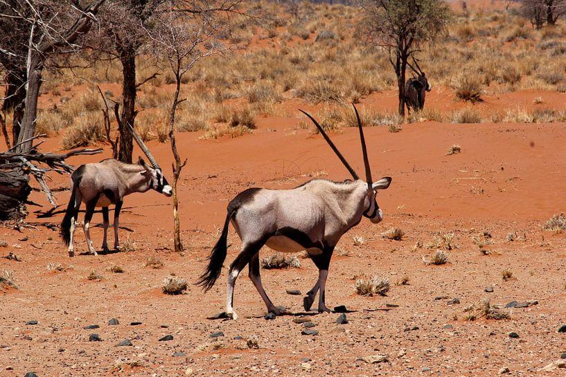 Gemsböcke Namibia von Inge Hogenbijl