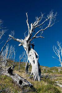 De geschrokken boom van