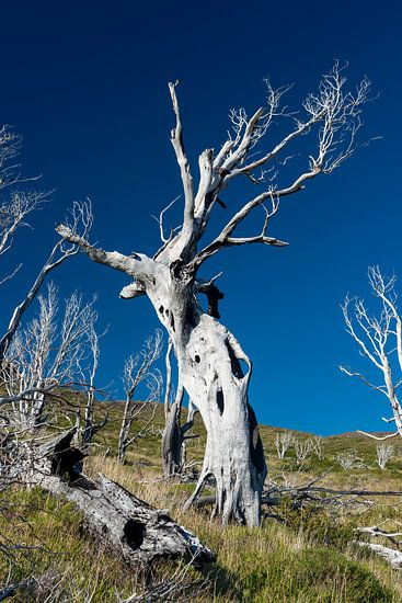 l'arbre effrayé sur Gerry van Roosmalen