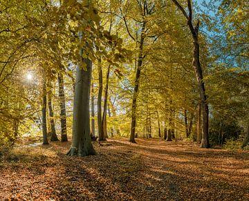 Boslaan in herfstkleuren op landgoed Vogelenzang, Vogelenzang, , Noord-Holland, Nederland van Rene van der Meer
