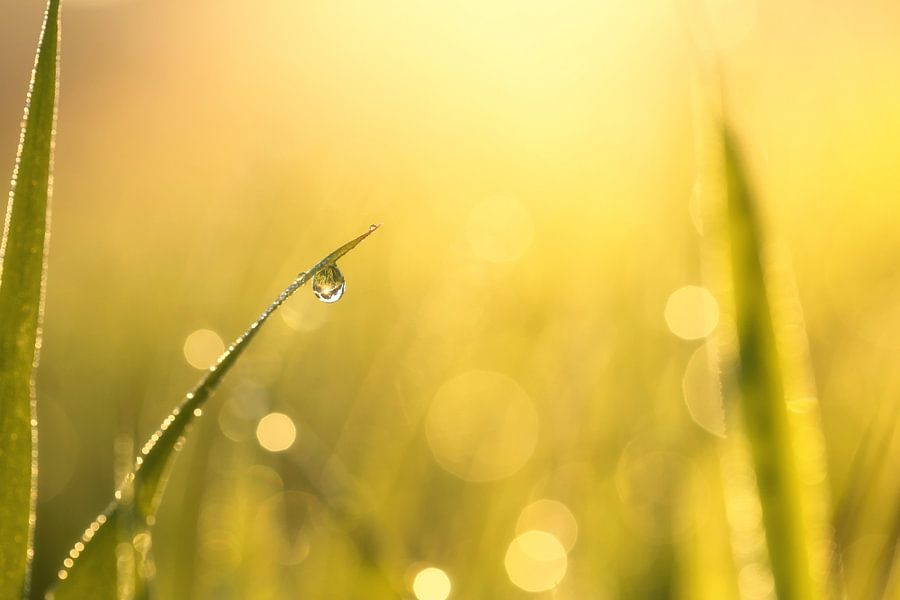 Morning jewel van LHJB Photography