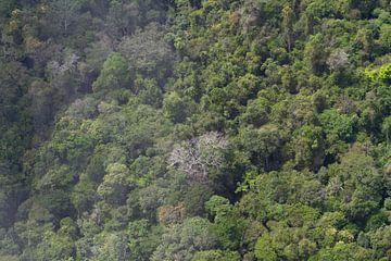 Tropische regenwoud van Suriname van rene marcel originals