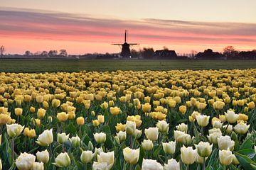 Tulpenfeld mit Mühle von John Leeninga