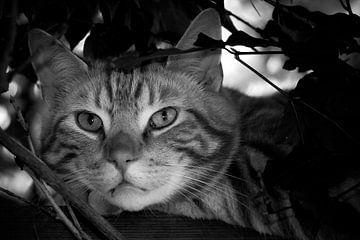 kater in zwartwit in de boom von Bianca Muntinga