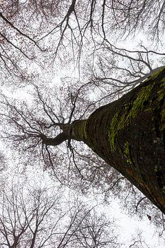 Hoge boom in Thailand van Marcel Derweduwen